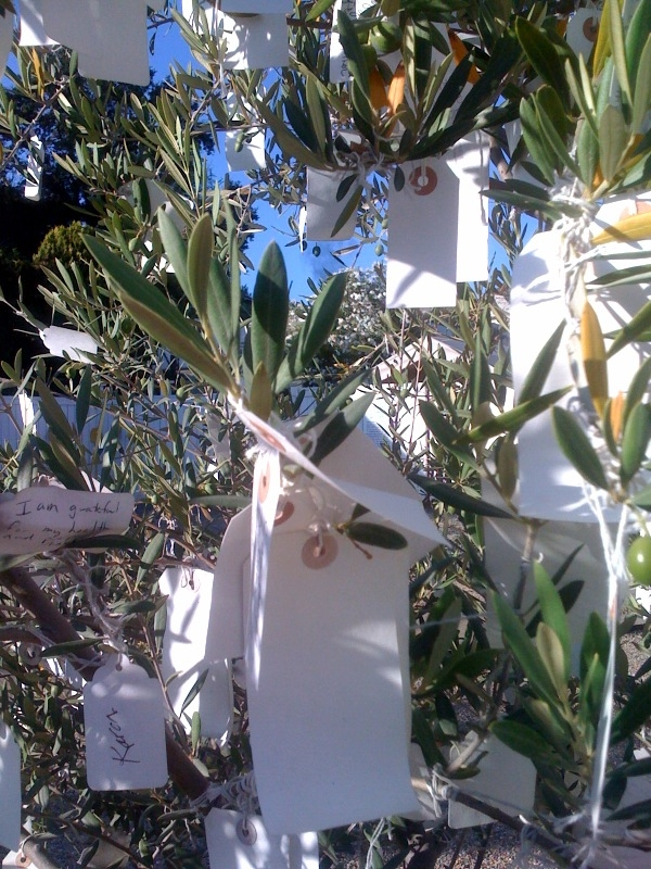 This is the olive tree we found at Indian Springs. Each tag represents someone's hopes or thoughts about what makes them thankful.