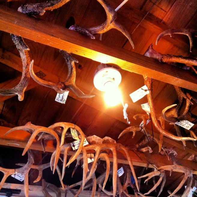 Antlers hang from the ceiling of David's workshop.